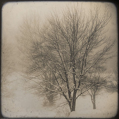 Trees in winter by marmota on flickr